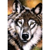 Wildlife project - wolf